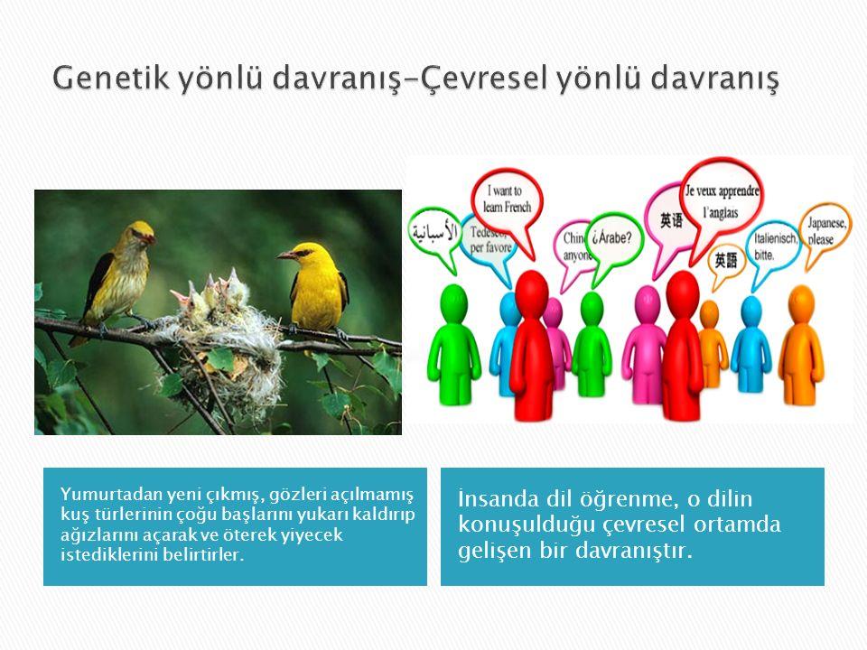 Genetik yönlü davranış-Çevresel yönlü davranış
