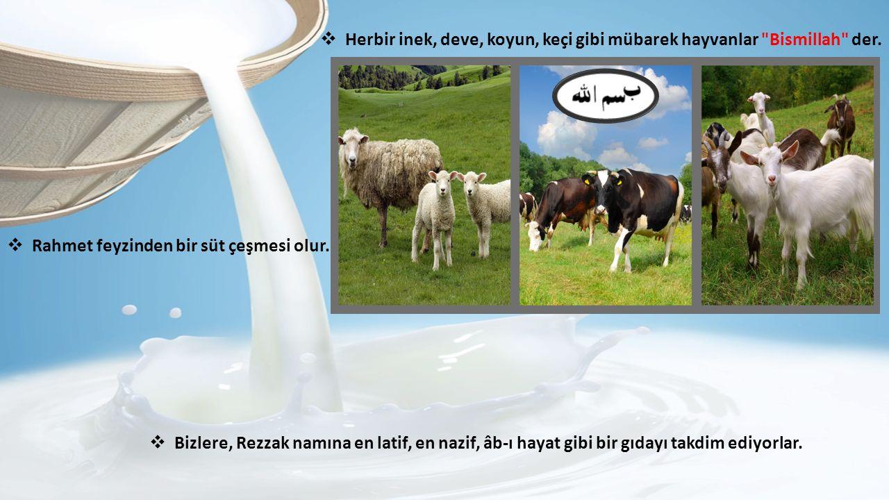 Herbir inek, deve, koyun, keçi gibi mübarek hayvanlar Bismillah der.