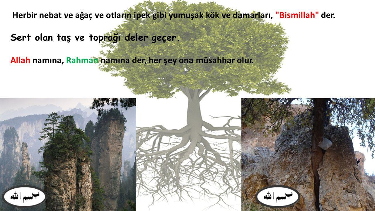 Herbir nebat ve ağaç ve otların ipek gibi yumuşak kök ve damarları, Bismillah der.