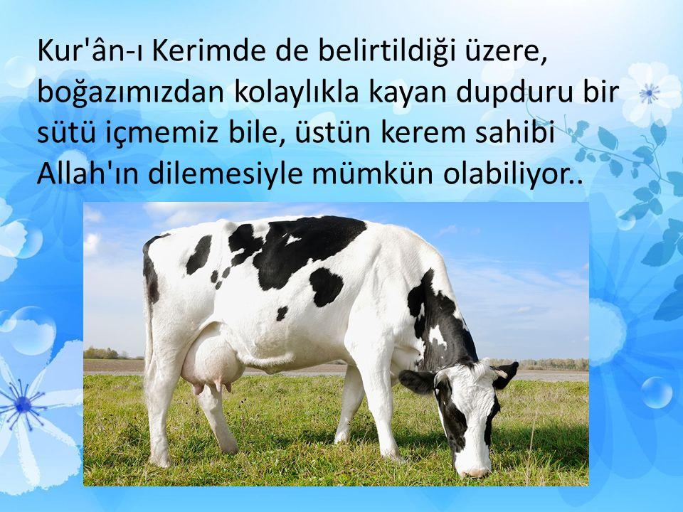 Kur ân-ı Kerimde de belirtildiği üzere, boğazımızdan kolaylıkla kayan dupduru bir sütü içmemiz bile, üstün kerem sahibi Allah ın dilemesiyle mümkün olabiliyor..