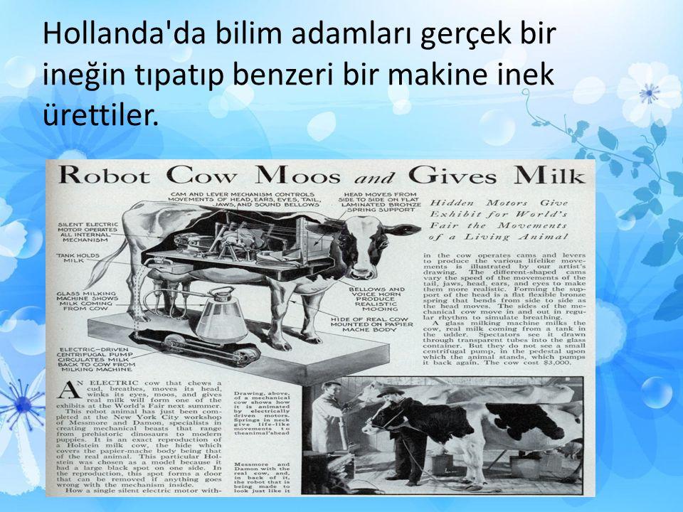 Hollanda da bilim adamları gerçek bir ineğin tıpatıp benzeri bir makine inek ürettiler.