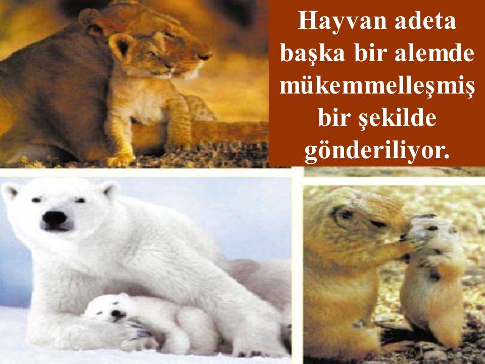 Hayvan adeta başka bir alemde mükemmelleşmiş bir şekilde gönderiliyor.