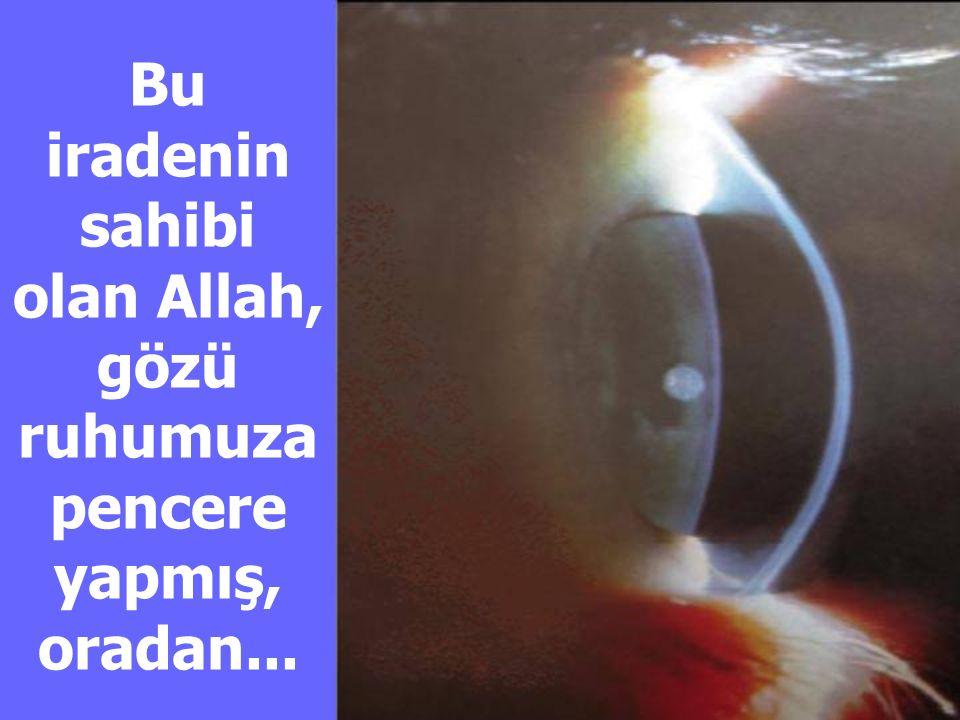Bu iradenin sahibi olan Allah, gözü ruhumuza pencere yapmış, oradan...