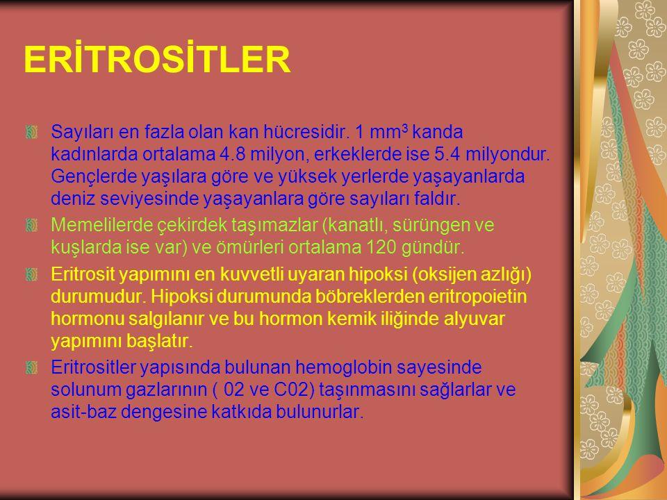 ERİTROSİTLER