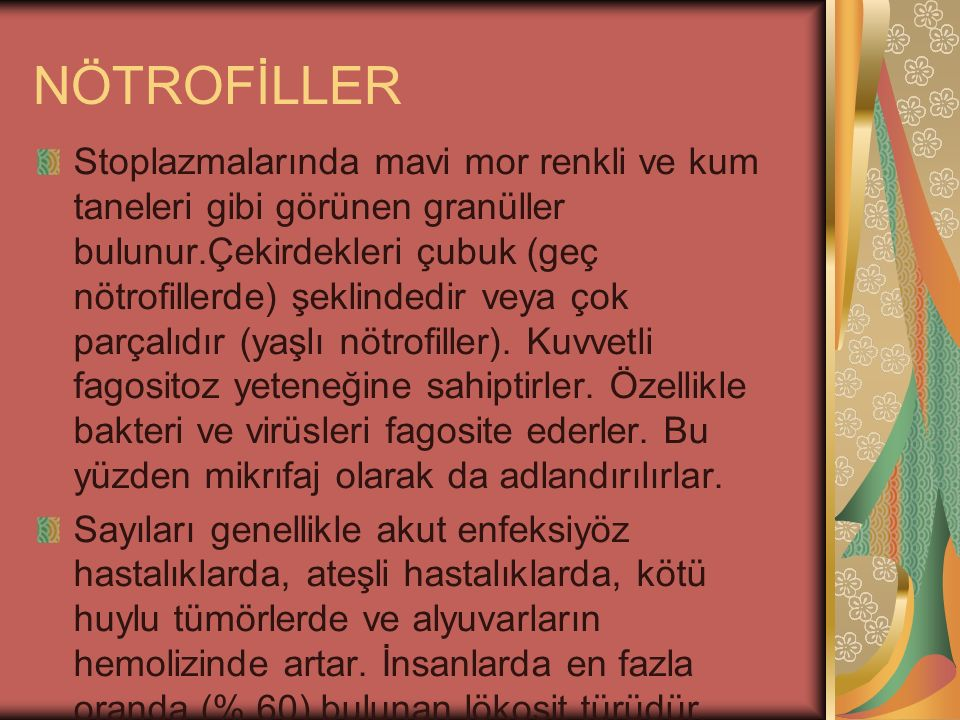 NÖTROFİLLER