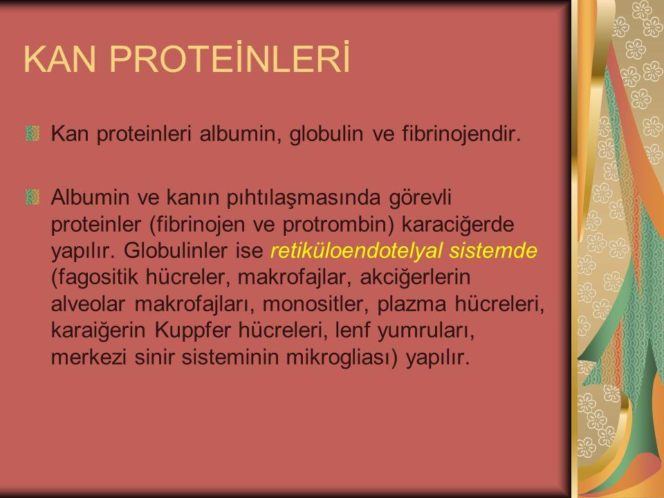 KAN PROTEİNLERİ Kan proteinleri albumin, globulin ve fibrinojendir.