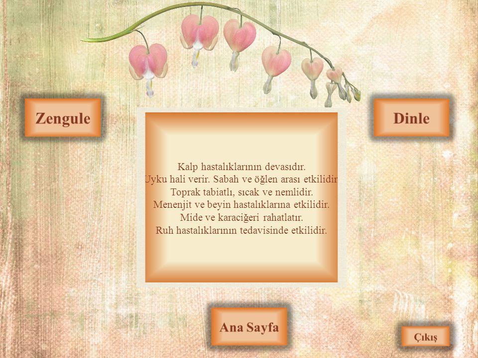 Zengule Dinle Ana Sayfa Kalp hastalıklarının devasıdır.