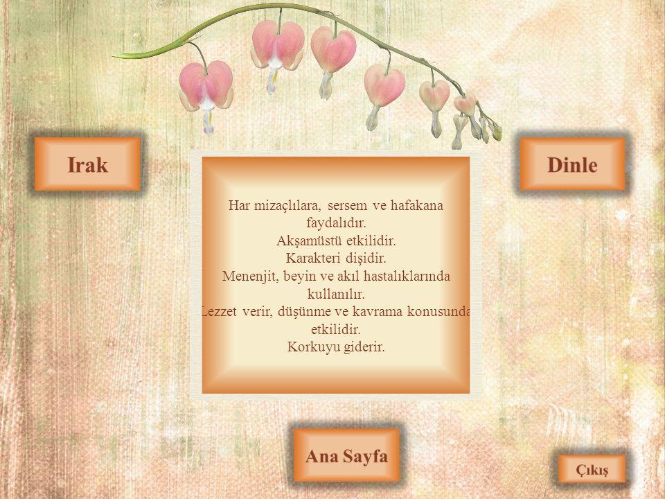 Irak Dinle Ana Sayfa Har mizaçlılara, sersem ve hafakana faydalıdır.
