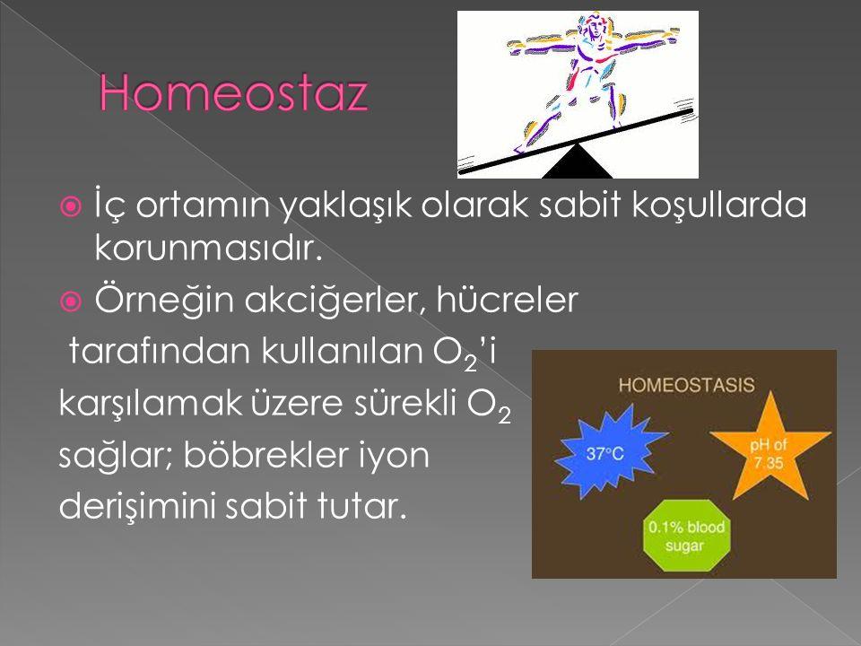 Homeostaz İç ortamın yaklaşık olarak sabit koşullarda korunmasıdır.