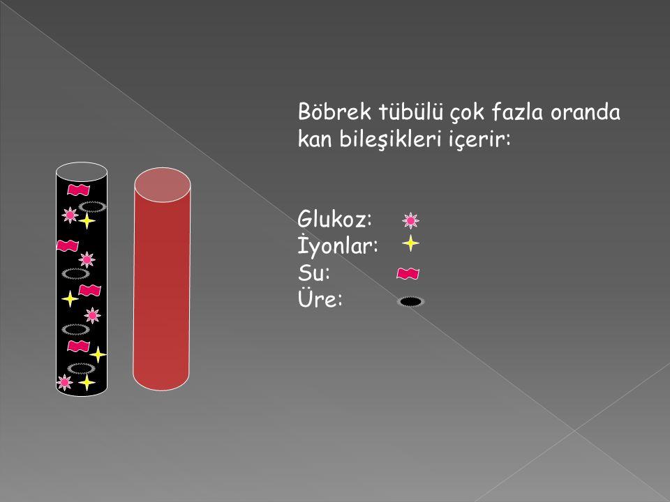 Böbrek tübülü çok fazla oranda kan bileşikleri içerir: