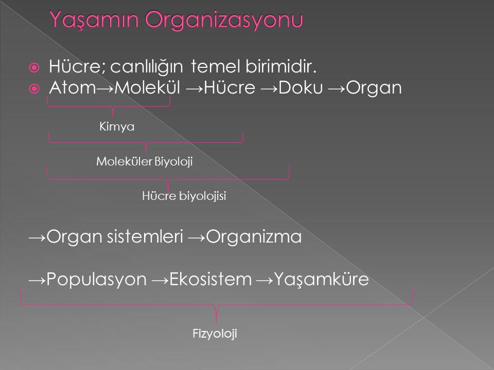 Yaşamın Organizasyonu