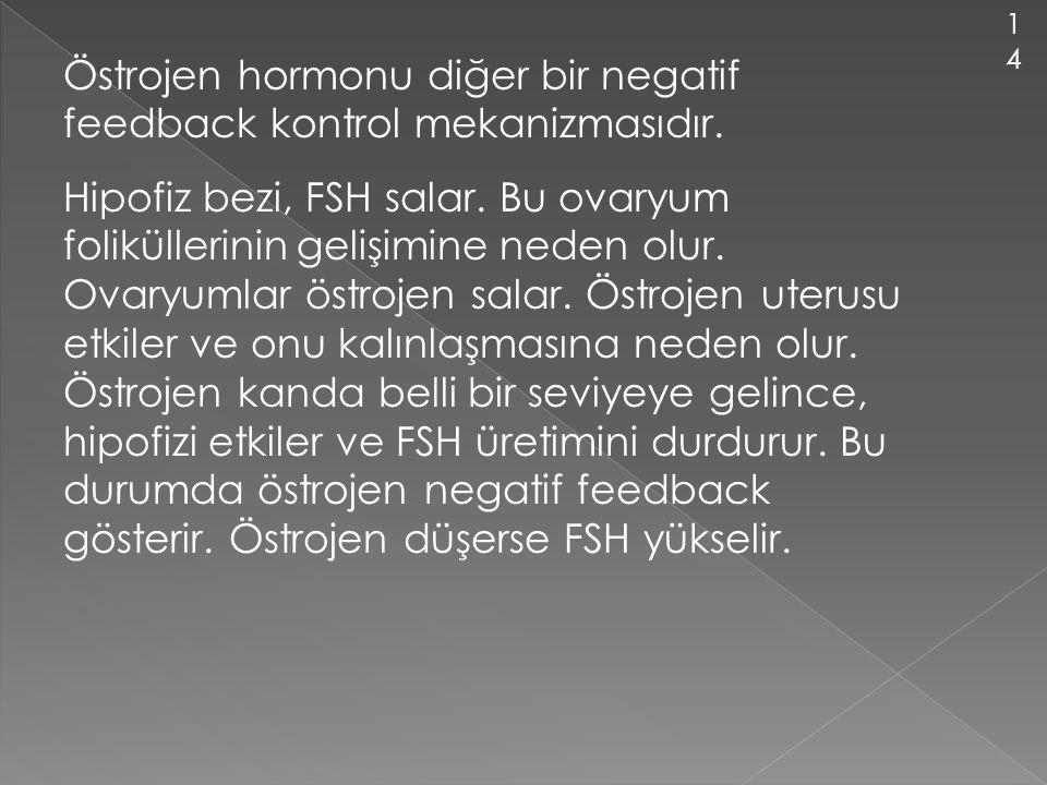 Östrojen hormonu diğer bir negatif feedback kontrol mekanizmasıdır.