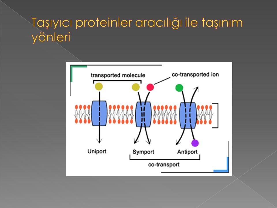 Taşıyıcı proteinler aracılığı ile taşınım yönleri