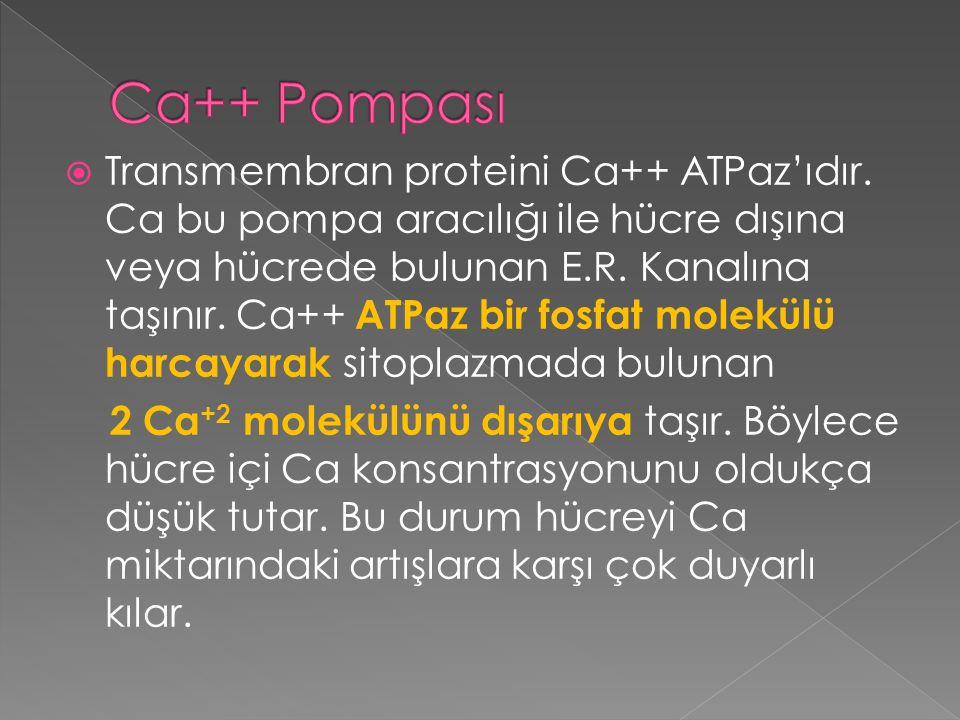 Ca++ Pompası
