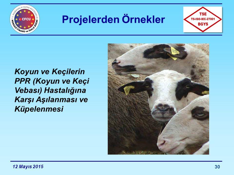 Projelerden Örnekler Koyun ve Keçilerin PPR (Koyun ve Keçi Vebası) Hastalığına Karşı Aşılanması ve Küpelenmesi.