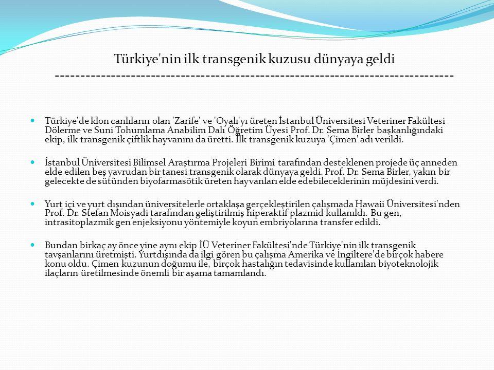 Türkiye nin ilk transgenik kuzusu dünyaya geldi --------------------------------------------------------------------------------