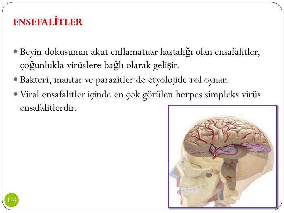 ENSEFALİTLER Beyin dokusunun akut enflamatuar hastalığı olan ensafalitler, çoğunlukla virüslere bağlı olarak gelişir.