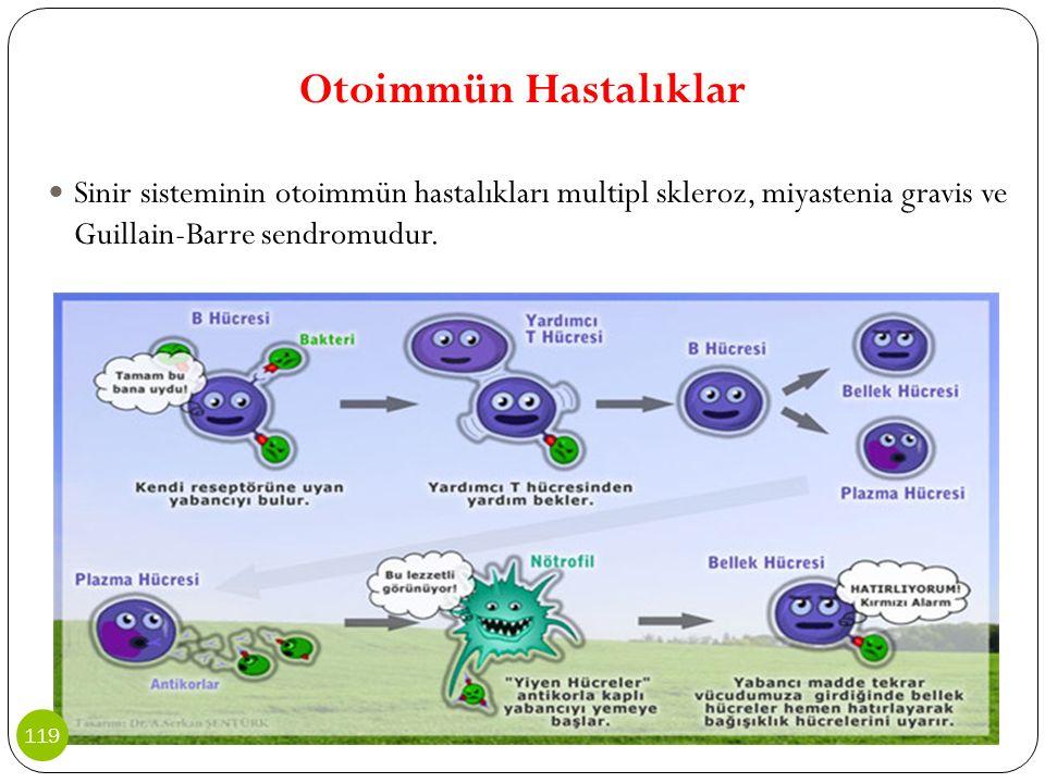 Otoimmün Hastalıklar Sinir sisteminin otoimmün hastalıkları multipl skleroz, miyastenia gravis ve Guillain-Barre sendromudur.
