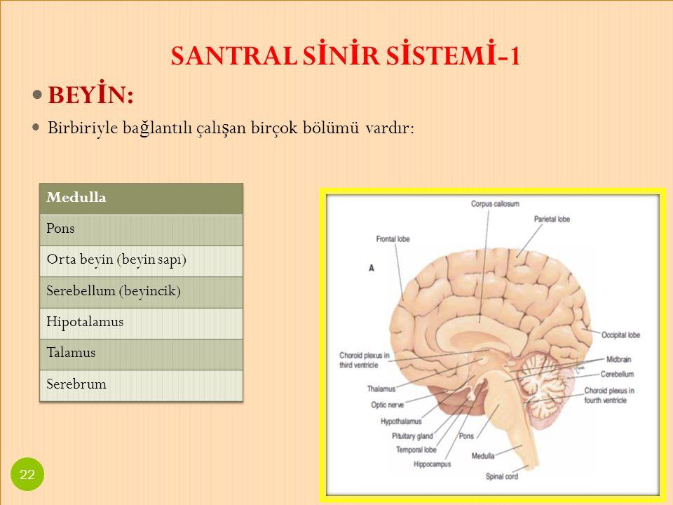 SANTRAL SİNİR SİSTEMİ-1
