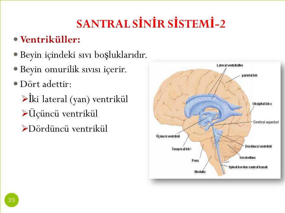 SANTRAL SİNİR SİSTEMİ-2