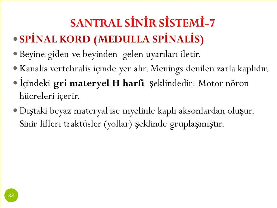 SANTRAL SİNİR SİSTEMİ-7