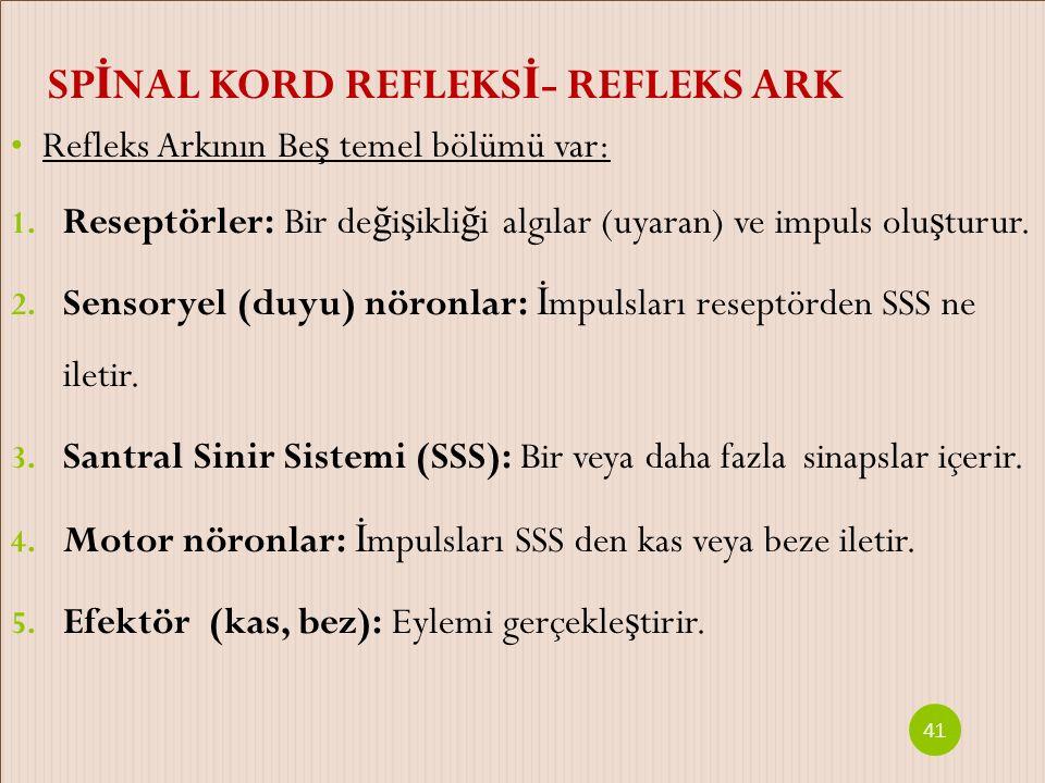SPİNAL KORD REFLEKSİ- REFLEKS ARK