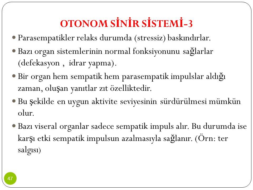 OTONOM SİNİR SİSTEMİ-3 Parasempatikler relaks durumda (stressiz) baskındırlar.