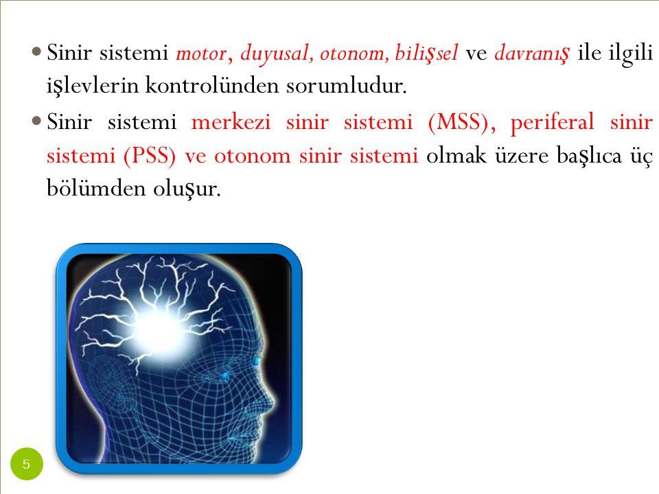 Sinir sistemi motor, duyusal, otonom, bilişsel ve davranış ile ilgili işlevlerin kontrolünden sorumludur.