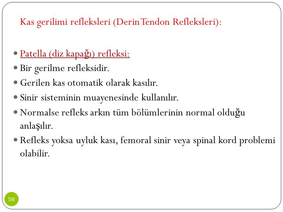 Kas gerilimi refleksleri (Derin Tendon Refleksleri):