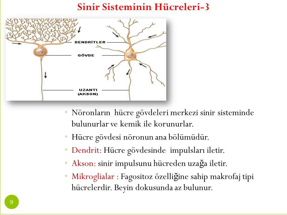 Sinir Sisteminin Hücreleri-3