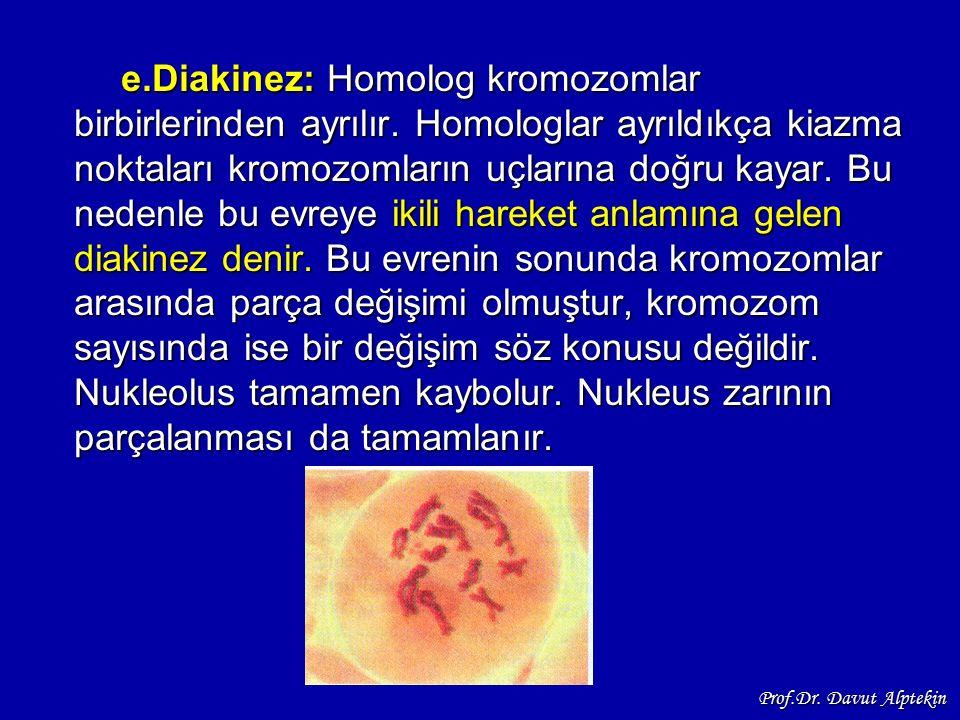 e. Diakinez: Homolog kromozomlar birbirlerinden ayrılır
