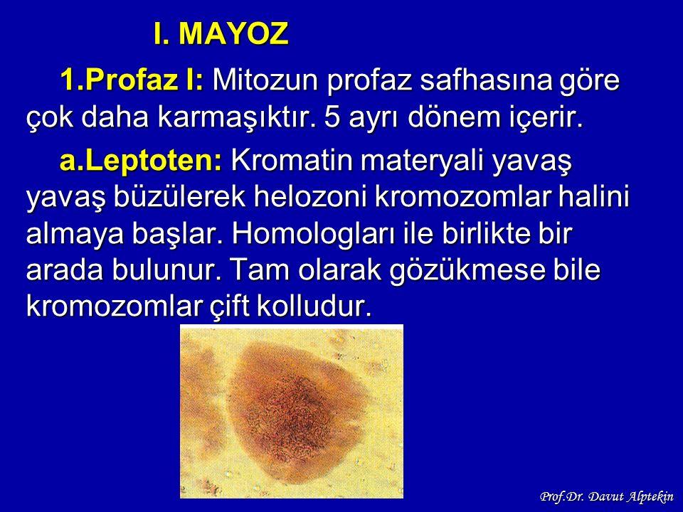 I. MAYOZ 1.Profaz I: Mitozun profaz safhasına göre çok daha karmaşıktır. 5 ayrı dönem içerir.