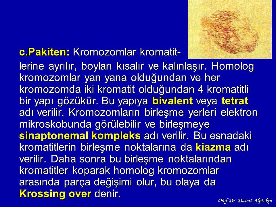 c.Pakiten: Kromozomlar kromatit-