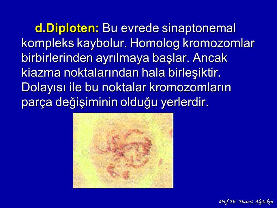 d. Diploten: Bu evrede sinaptonemal kompleks kaybolur