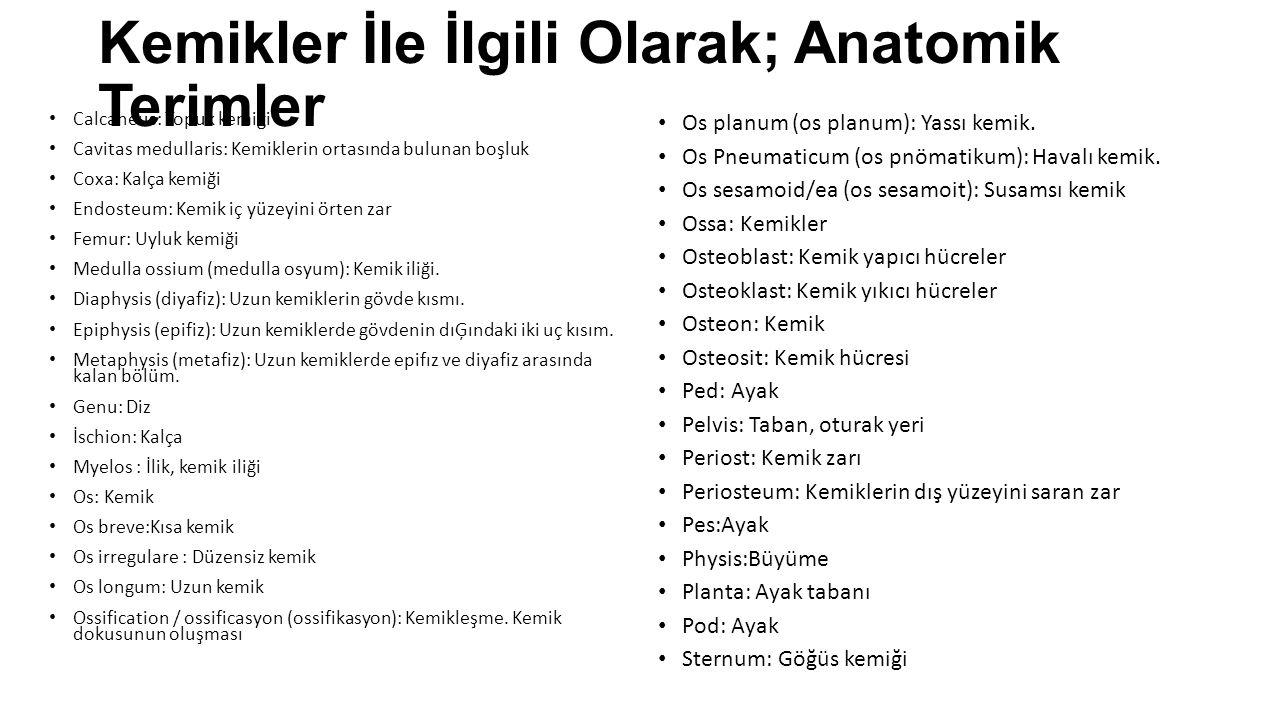 Kemikler İle İlgili Olarak; Anatomik Terimler