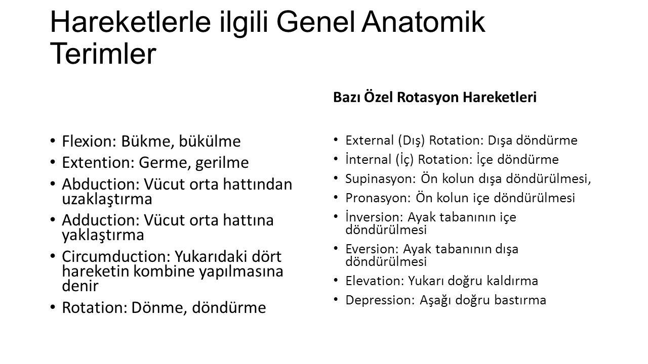 Hareketlerle ilgili Genel Anatomik Terimler