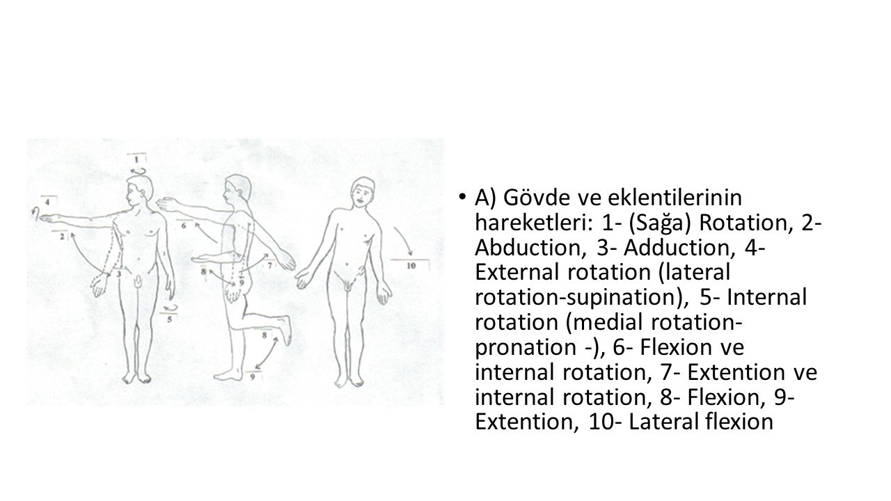 A) Gövde ve eklentilerinin hareketleri: 1- (Sağa) Rotation, 2- Abduction, 3- Adduction, 4- External rotation (lateral rotation-supination), 5- Internal rotation (medial rotation- pronation -), 6- Flexion ve internal rotation, 7- Extention ve internal rotation, 8- Flexion, 9- Extention, 10- Lateral flexion