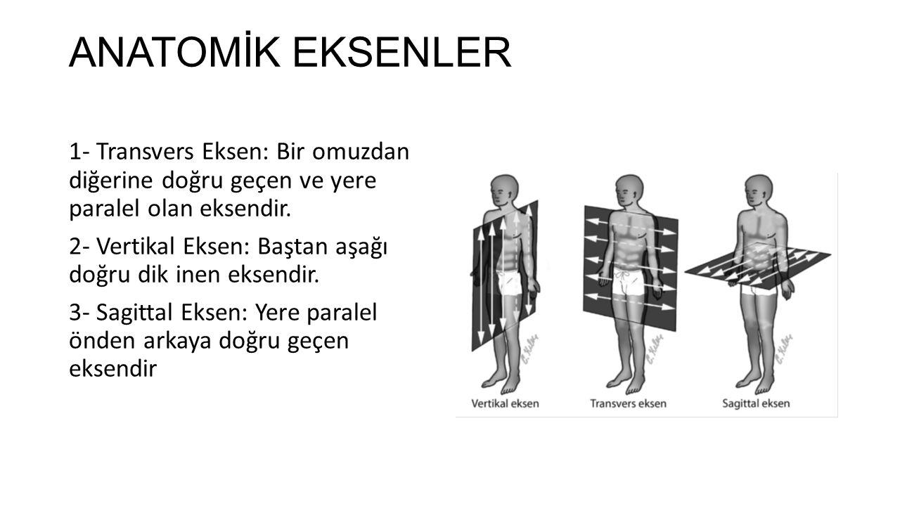 ANATOMİK EKSENLER