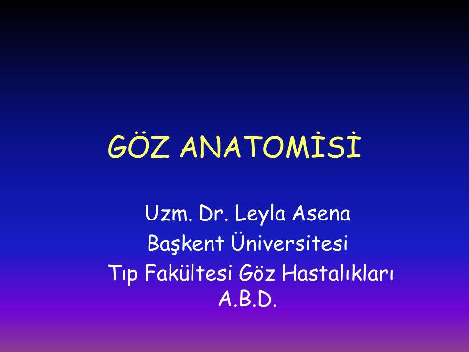 Tıp Fakültesi Göz Hastalıkları A.B.D.