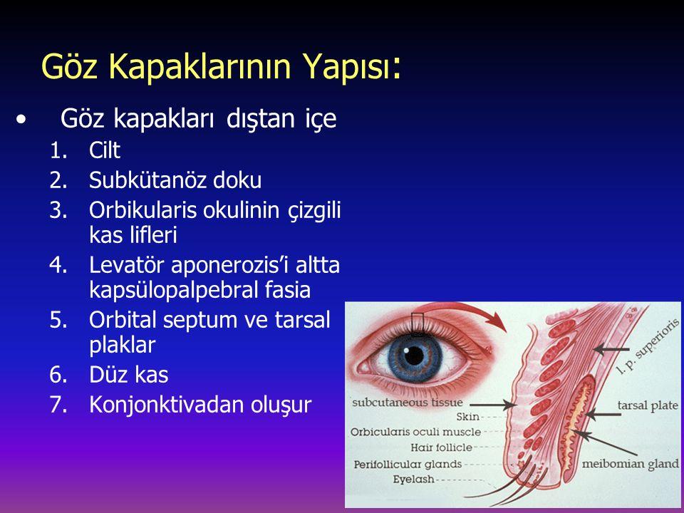 Göz Kapaklarının Yapısı: