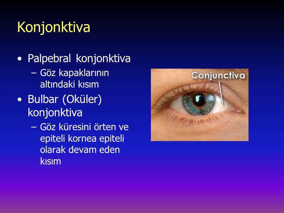Konjonktiva Palpebral konjonktiva Bulbar (Oküler) konjonktiva