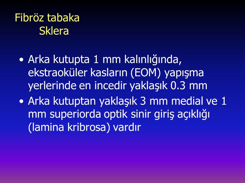 Fibröz tabaka Sklera Arka kutupta 1 mm kalınlığında, ekstraoküler kasların (EOM) yapışma yerlerinde en incedir yaklaşık 0.3 mm.