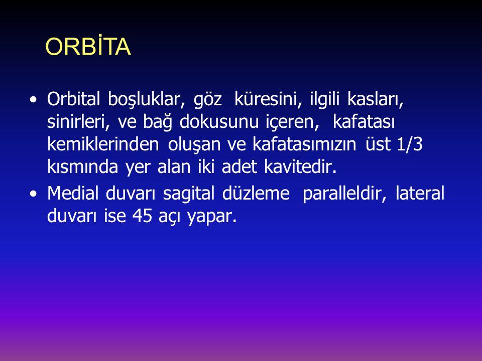 ORBİTA