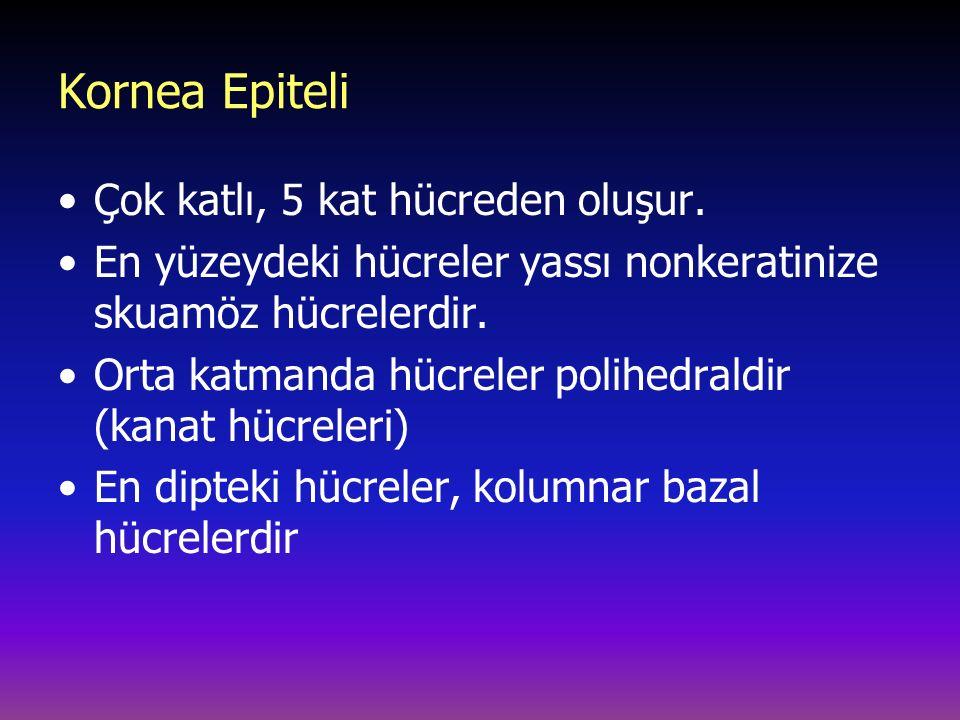 Kornea Epiteli Çok katlı, 5 kat hücreden oluşur.