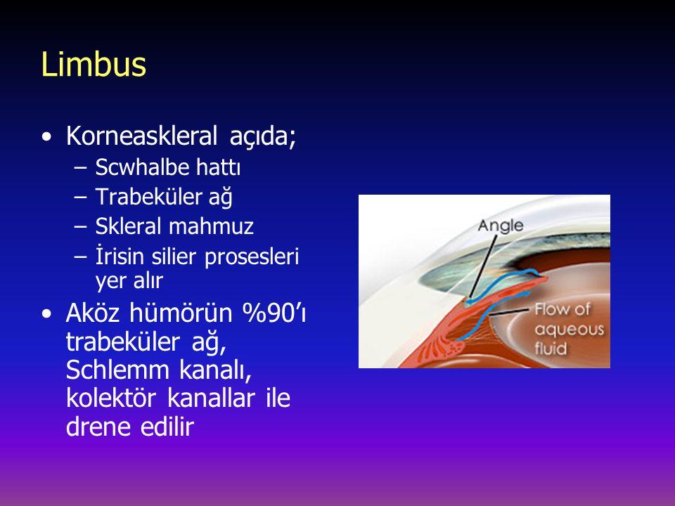 Limbus Korneaskleral açıda;