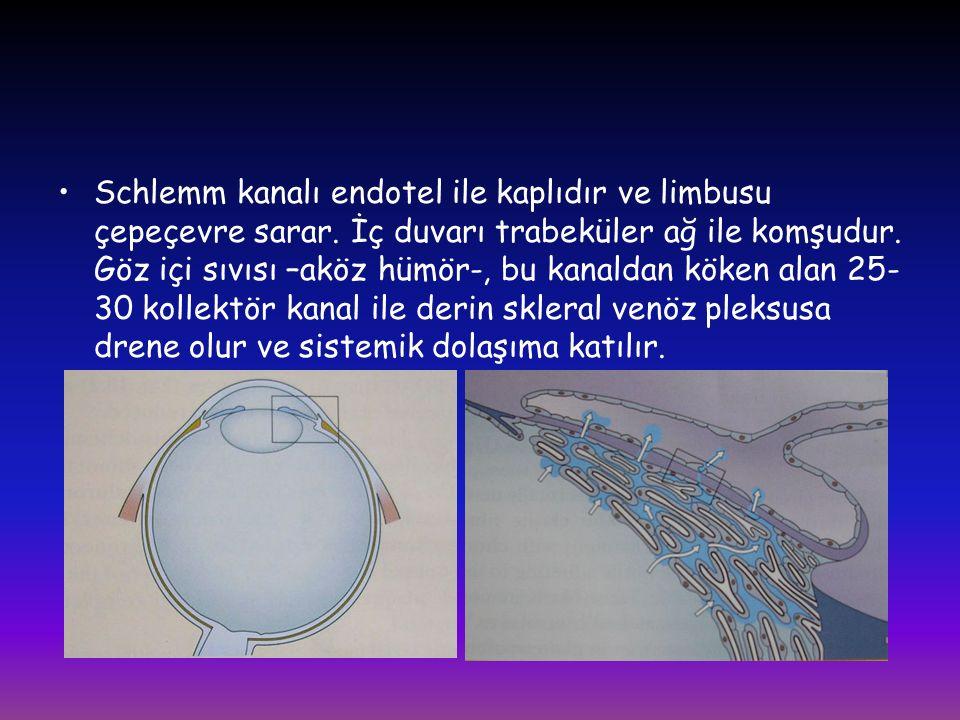 Schlemm kanalı endotel ile kaplıdır ve limbusu çepeçevre sarar