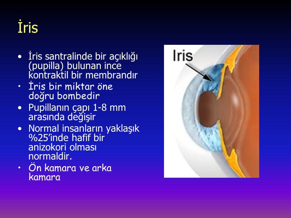İris İris santralinde bir açıklığı (pupilla) bulunan ince kontraktil bir membrandır. İris bir miktar öne doğru bombedir.