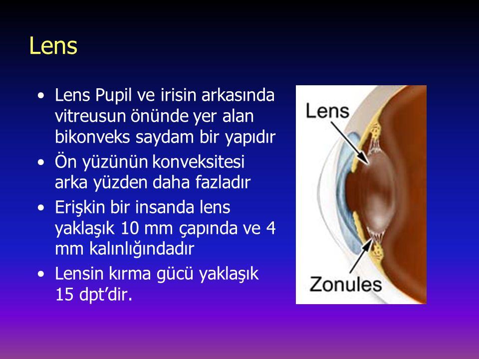 Lens Lens Pupil ve irisin arkasında vitreusun önünde yer alan bikonveks saydam bir yapıdır. Ön yüzünün konveksitesi arka yüzden daha fazladır.