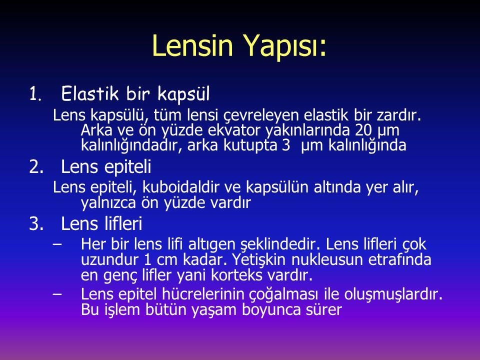 Lensin Yapısı: Elastik bir kapsül Lens epiteli Lens lifleri