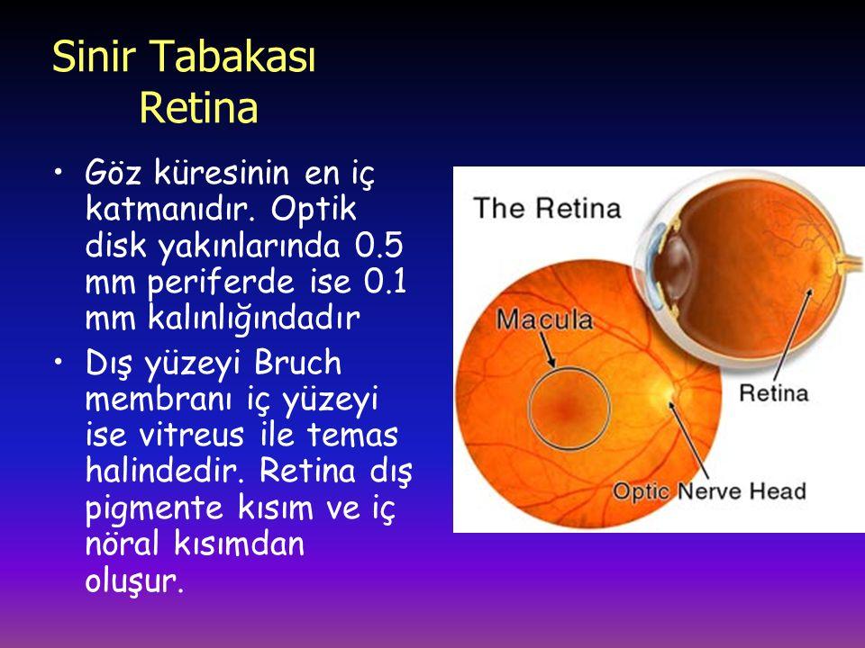Sinir Tabakası Retina Göz küresinin en iç katmanıdır. Optik disk yakınlarında 0.5 mm periferde ise 0.1 mm kalınlığındadır.